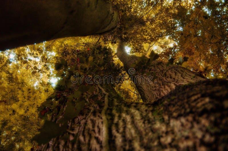 Autumn Tree Trunk photos libres de droits