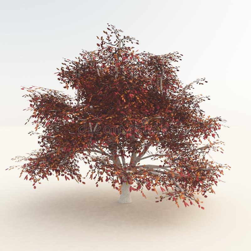 Autumn Tree On White royalty free stock photo