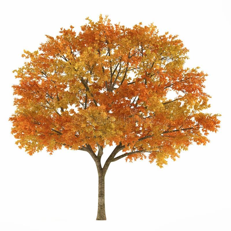 Download Autumn tree stock illustration. Image of autumn, yellow - 36409242