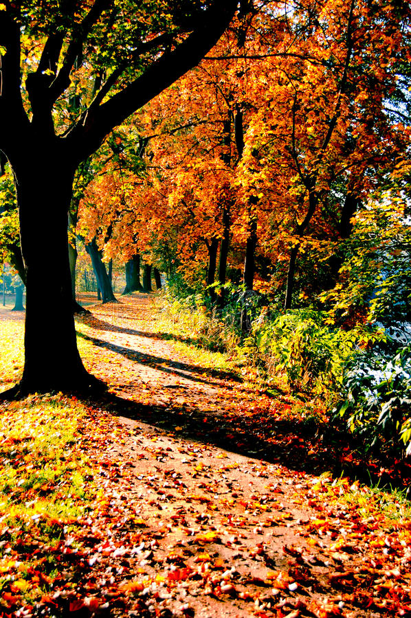 Download Autumn trees stock image. Image of color, vertical, natural - 10815727