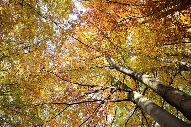 Download Autumn trees stock image. Image of brown, leaf, beauty - 27296747
