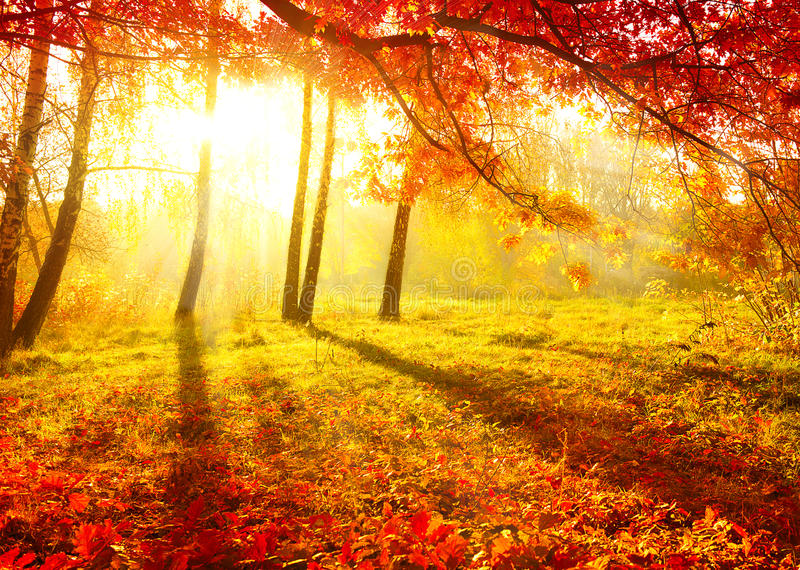 Autumn Trees. Autumnal Park. Autumn Trees and Leaves. Fal royalty free stock photo