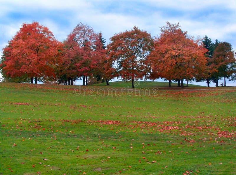 Download Autumn Trees Stock Photos - Image: 300993
