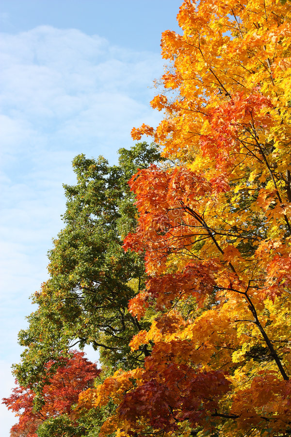 Download Autumn trees stock photo. Image of october, environment - 6563342