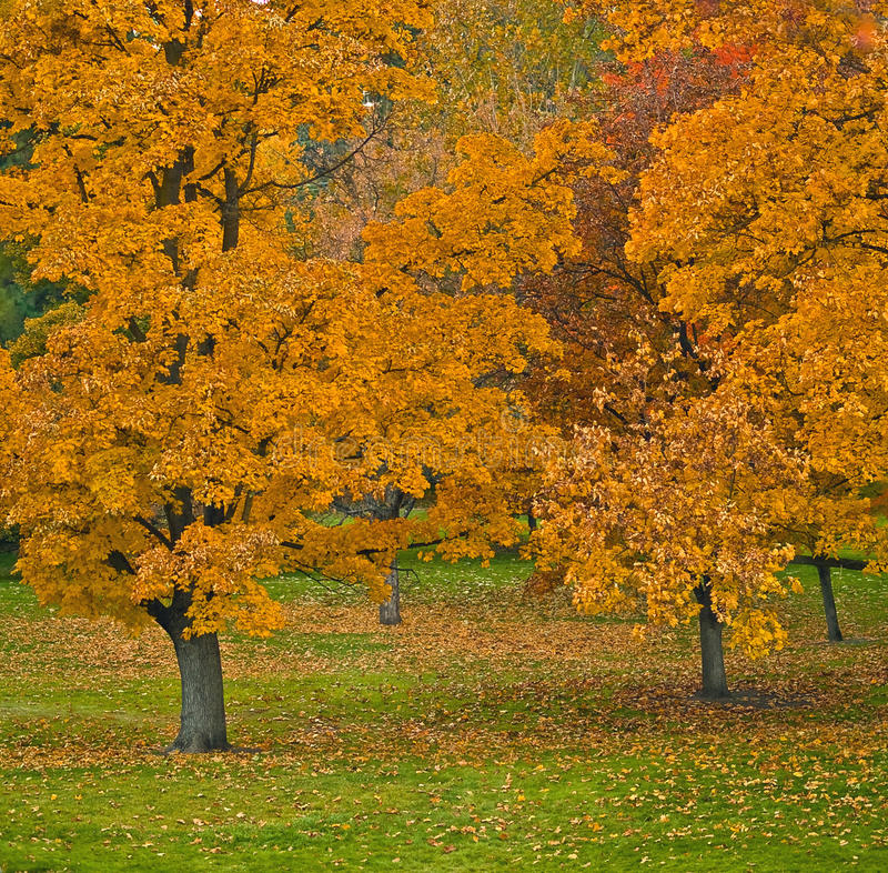 Download Autumn Trees stock image. Image of autumn, peaceful, restful - 9518627