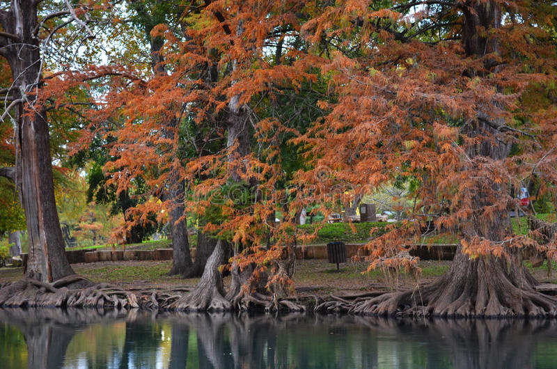 Autumn Trees along River Bank stock photography