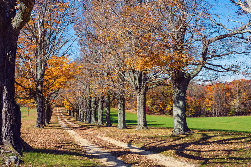 Autumn Trees Along Road fotos de archivo