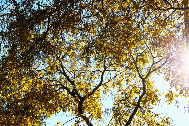 Autumn trees Barcelona stock image