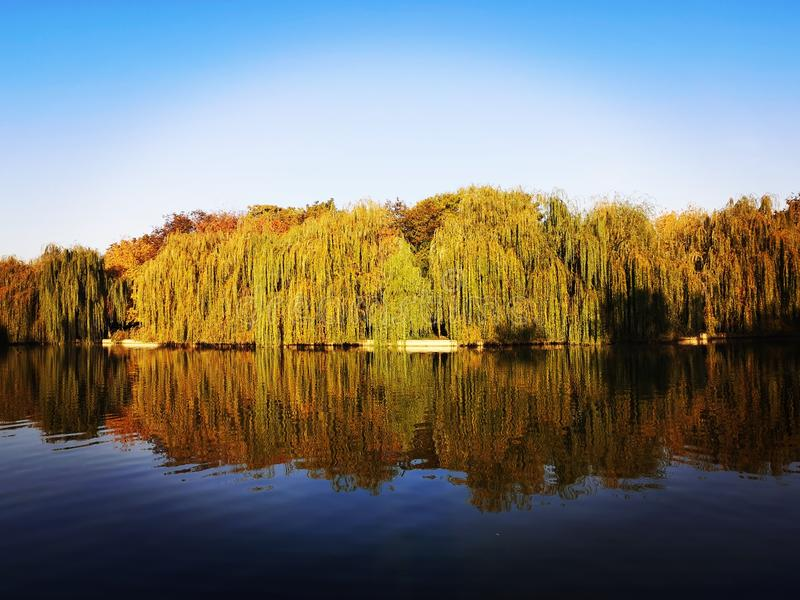 Autumn trees in beautiful colors and blue lake and sky. Autumn trees, willow, oak, in beautiful colors and blue lake and sky, water, vegetation, flora, skies stock photo
