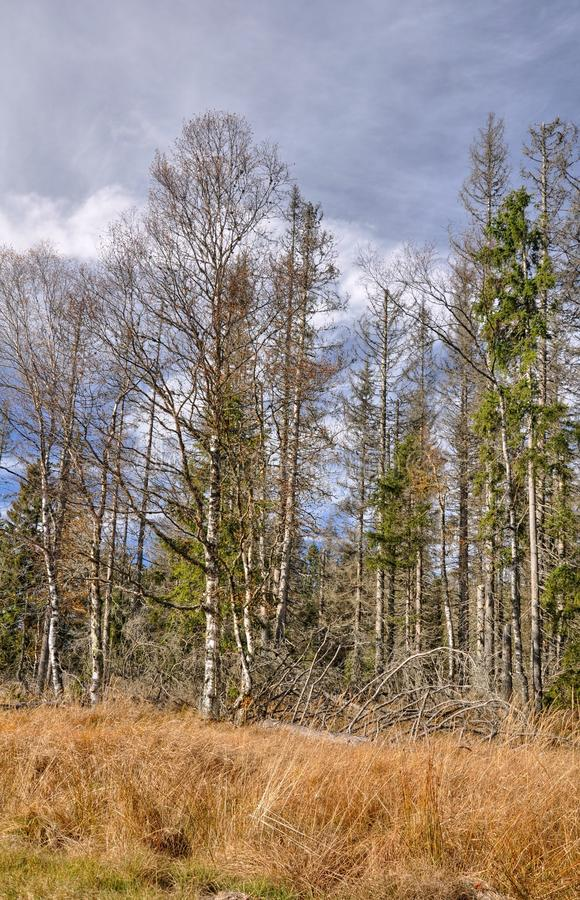 Download Autumn trees stock image. Image of blue, outdoors, republic - 34590101