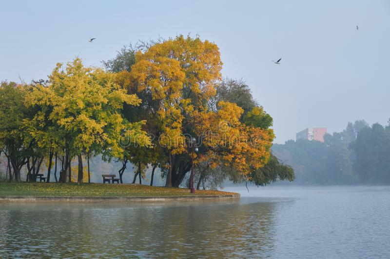 Autumn trees and benches at the edge of an island in Alexandru Ioan Cuza IOR park, Bucharest, Romania, on a foggy morning.  stock image