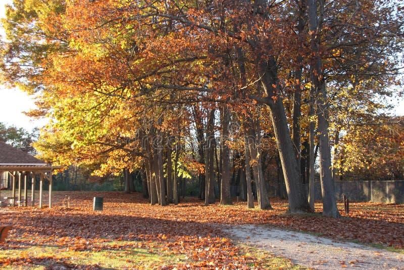 Autumn Trees bij Park stock fotografie