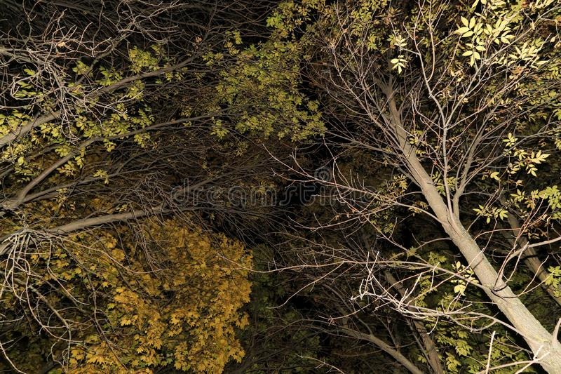 Autumn trees, branches with leaves abstract texture background stock photos