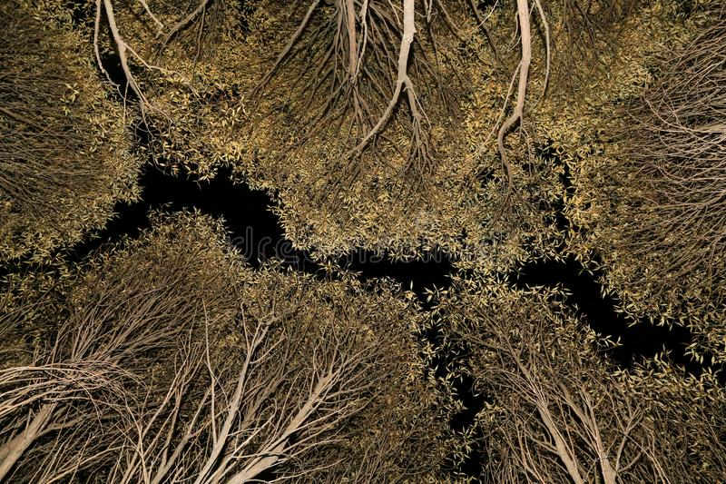Autumn Trees Branches, leaves nature abstract background texture royalty free stock photography