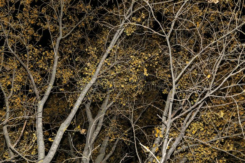 Autumn Trees Branches, leaves nature abstract background textureAutumn Trees branches with leaves nature texture background stock photography