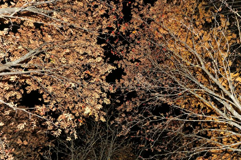 Autumn trees, branches with leaves abstract texture background royalty free stock photo