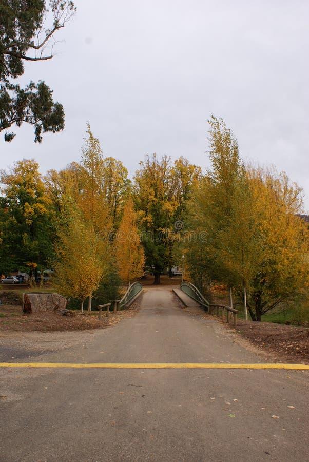 Autumn Trees Beside Bridge foto de stock