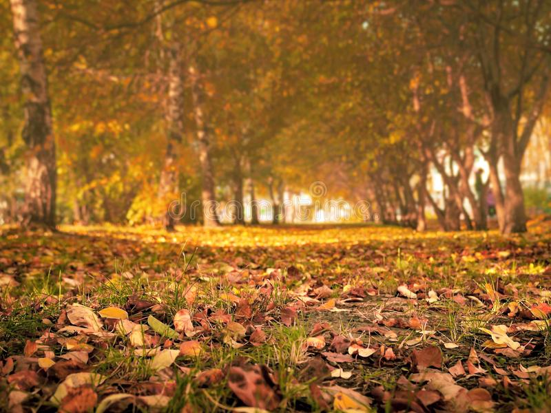Autumn Trees, Colorful Fall Foliage. City Park Alley. royalty free stock images