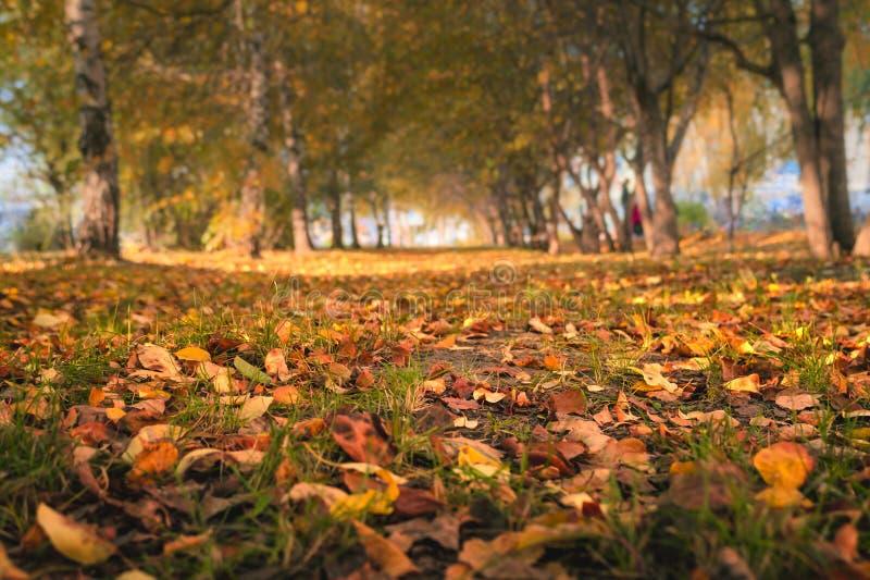 Autumn Trees, Colorful Fall Foliage. City Park Alley. stock photos
