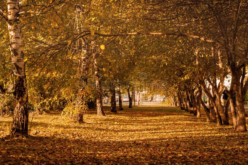 Autumn Trees, Colorful Fall Foliage. City Park Alley. royalty free stock photos