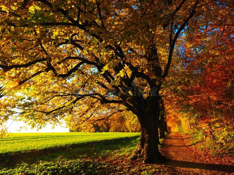Autumn Trees Free Public Domain Cc0 Image