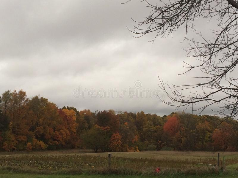 Autumn Trees colorido no dia nebuloso foto de stock royalty free
