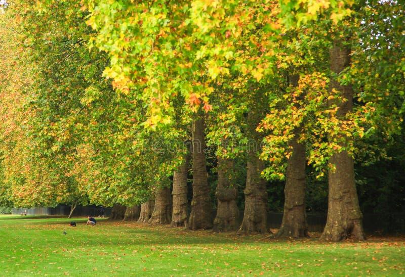 Autumn Trees en el parque de Kensington en Londres imagenes de archivo