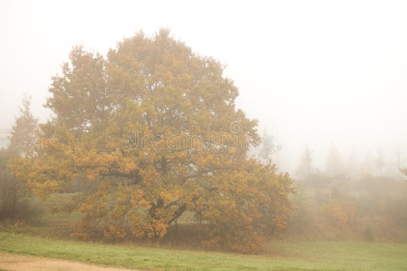 Autumn trees in fog royalty free stock images