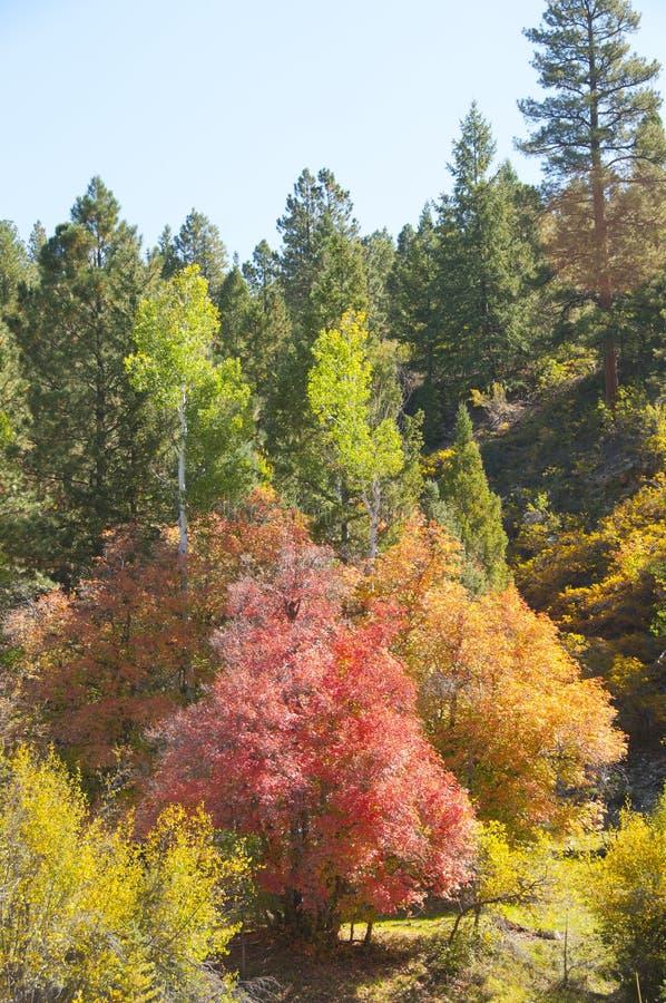Download Autumn Trees stock photo. Image of fall, utah, colors - 99239680