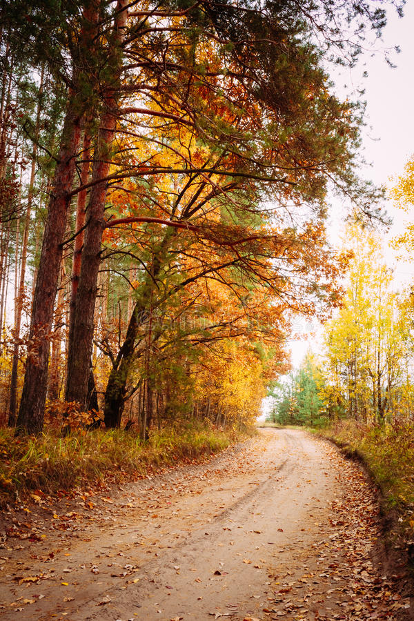 Autumn Trees In Forest coloré photos stock