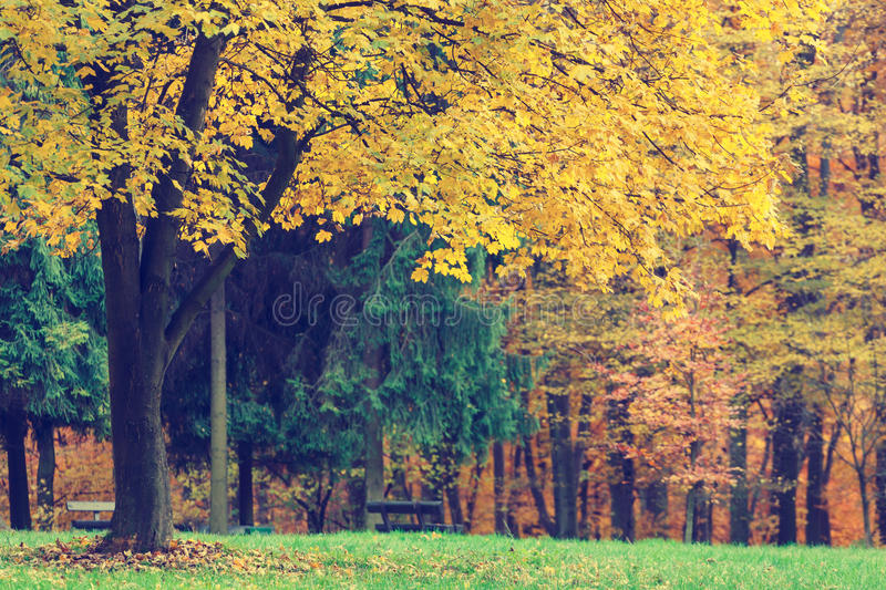 Autumn Trees In Forest colorido imagens de stock