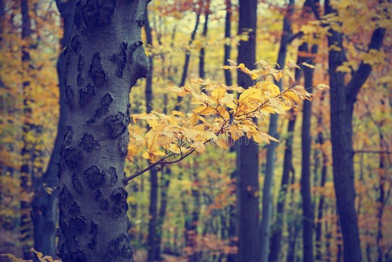Autumn Trees In Forest colorido imagem de stock