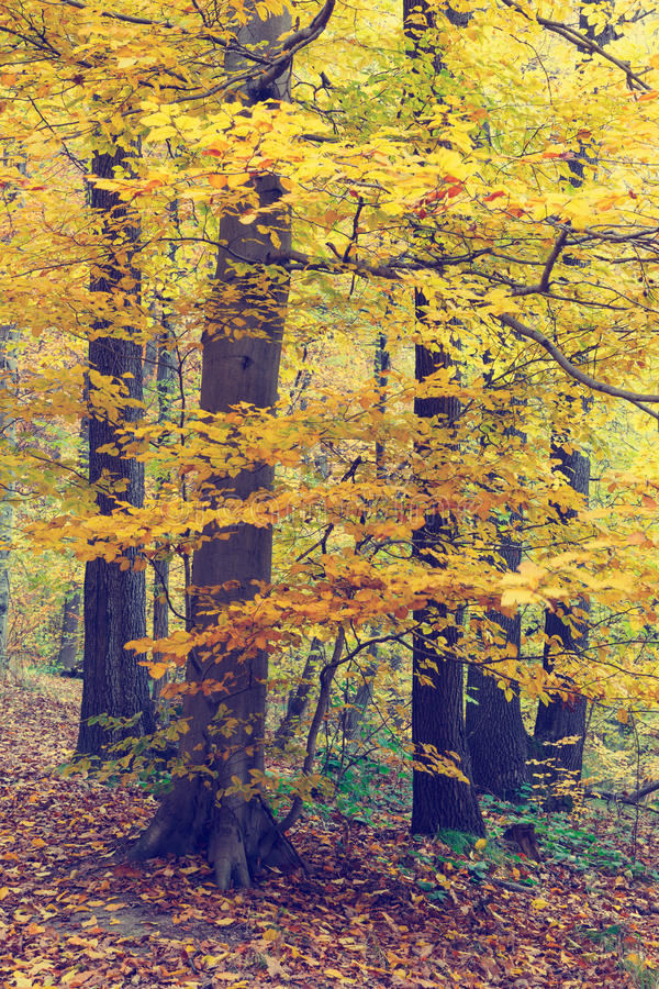 Autumn Trees In Forest colorido imagem de stock royalty free