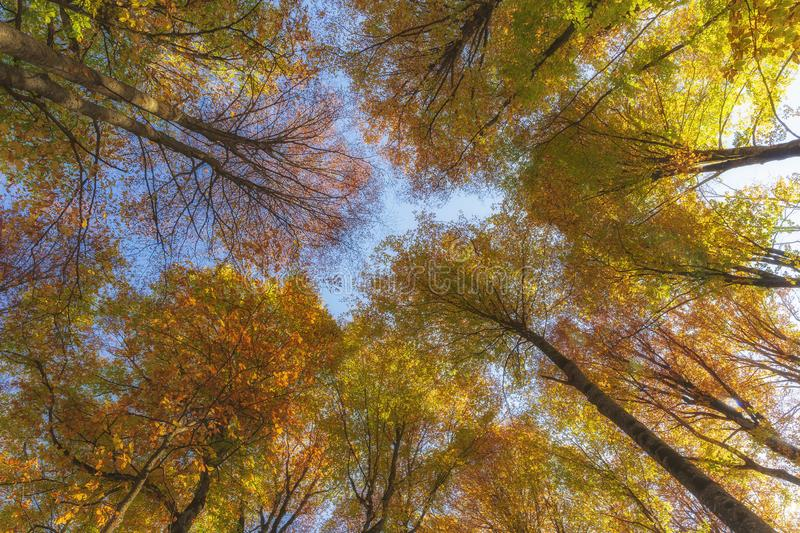Autumn trees in the forest. Top to bottom view royalty free stock photography