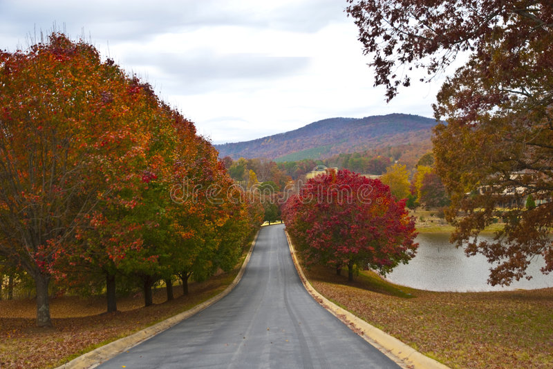 Autumn Trees/Golf Course. The road into a golf course with fall colors lining the sides stock photography