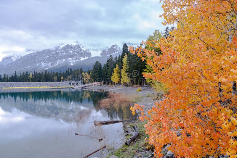 Autumn trees with green pine forest at lake minnewanka in the evening , Banff national par. K,Alberta,Canada stock photography
