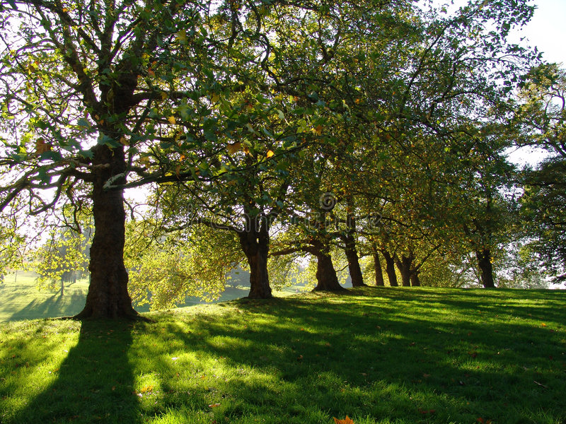Download Autumn Trees In Greenwich Park Stock Photo - Image: 1514660