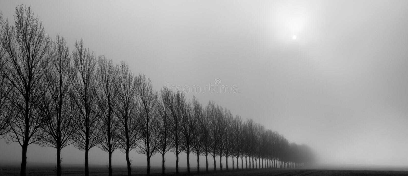 Autumn Trees i misten royaltyfri fotografi