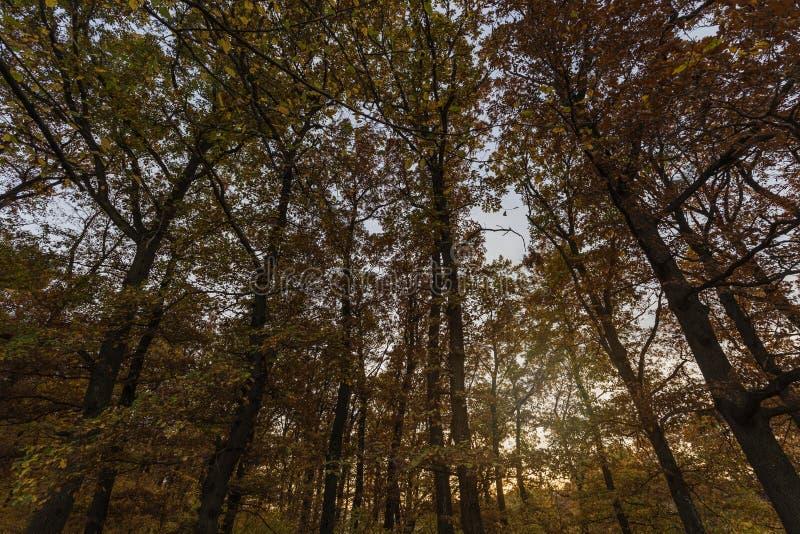 Autumn Trees im Sonnenlicht stockfoto