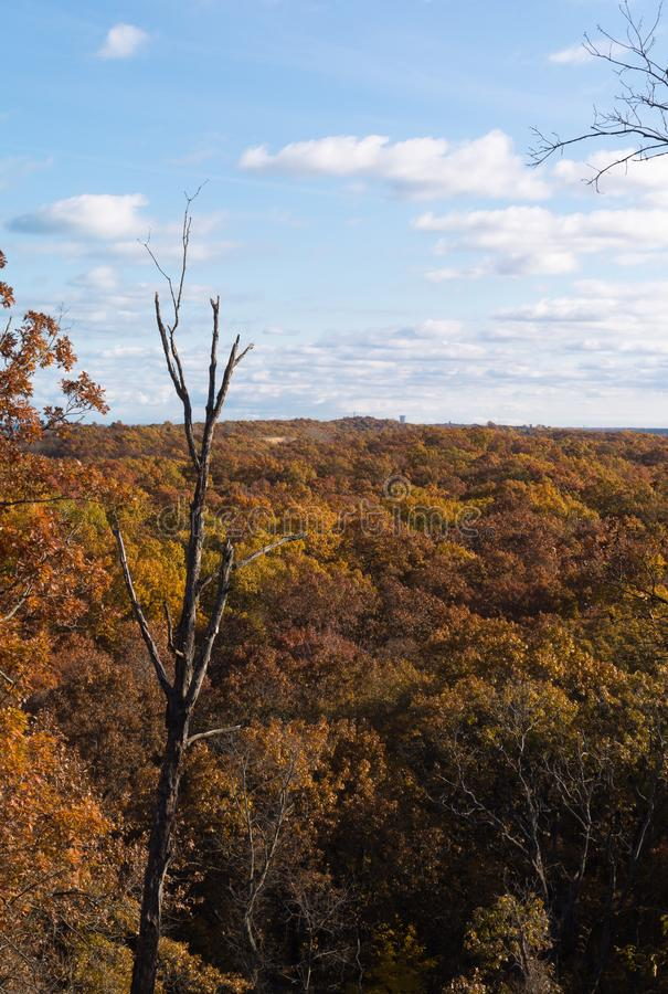Autumn trees in Indiana Dunes State Park. Autumn in Indiana Dunes State Park royalty free stock photography