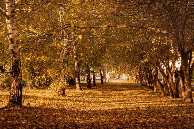 Autumn Trees, Kleurrijk Dalingsgebladerte De steeg van het stadspark royalty-vrije stock foto's