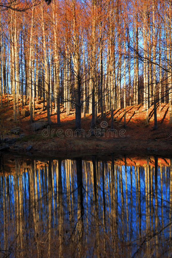 Download Autumn Trees And Lake Stock Photos - Image: 21856973