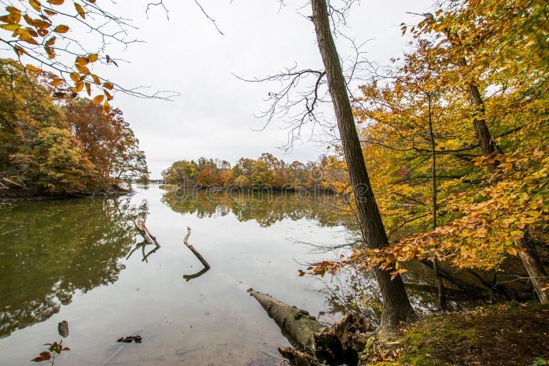 Autumn Trees Lake Side sull'isola dell'ipsilon a Baltimora, Maryland immagine stock libera da diritti