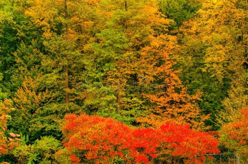Autumn trees landscape view stock photo