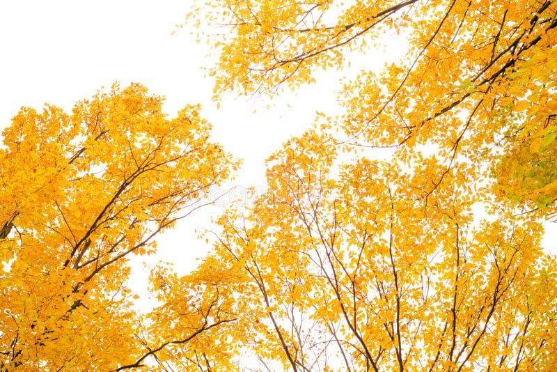 Autumn trees landscape view stock image