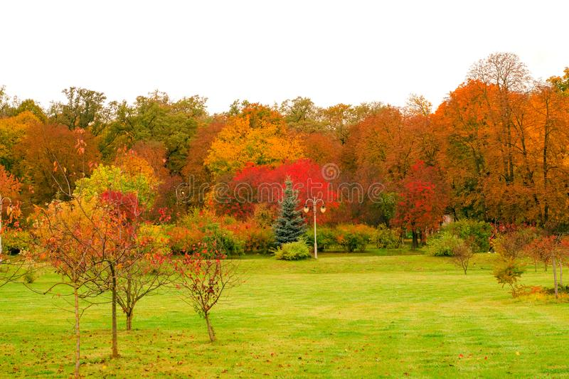 Autumn trees landscape view royalty free stock image