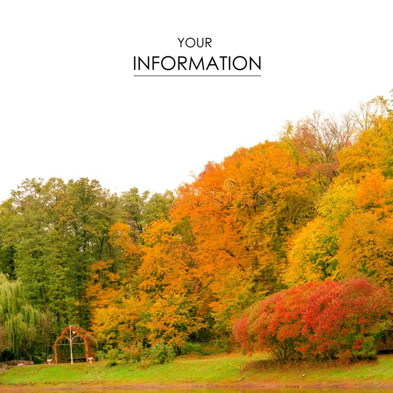 Autumn trees landscape view of yellow red orange leaves stock images