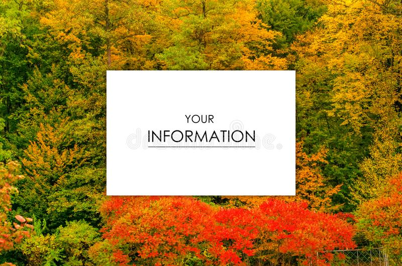Autumn trees landscape view of yellow red orange leaves royalty free stock photo