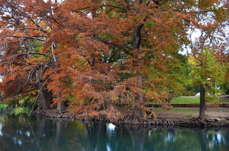 Autumn Trees le long de berge images stock