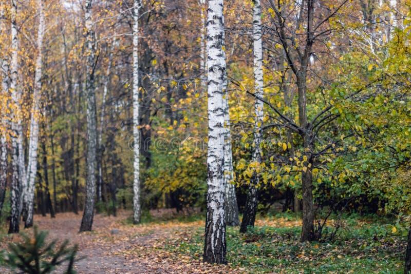 Autumn trees, leaves. Betuful autumn landscape. Uman, Ukraine. The most beautiful plase in Europe. National Ukraine park Sofiivka stock images